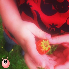 stawberry_picking