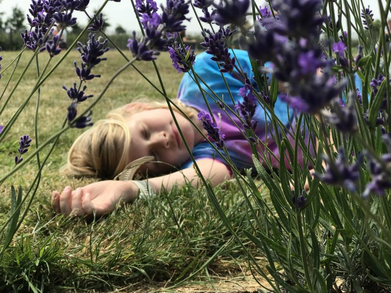 boy sleeping in lavender field