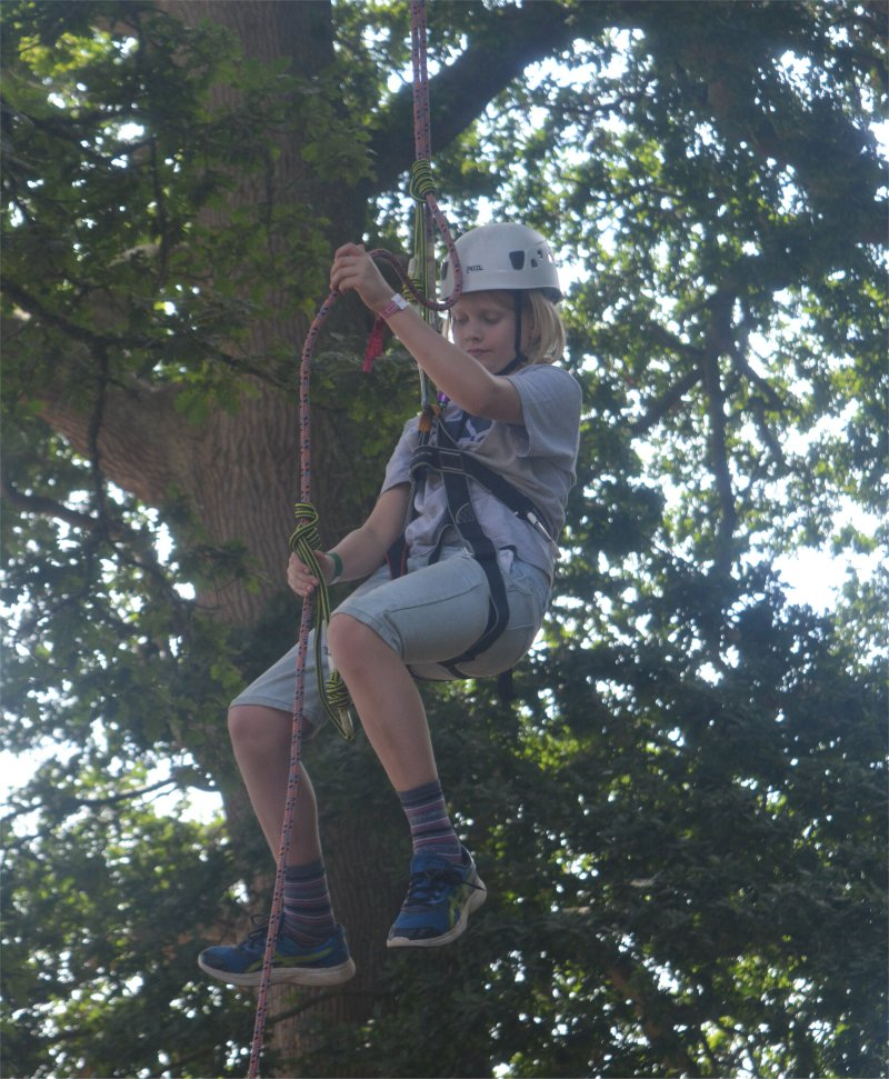 boy climbing a tree with harness