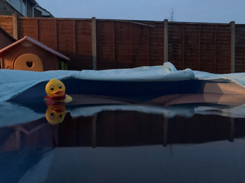garden bath of cold water in the dark with a rubber duck thermometer