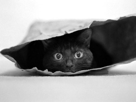 Cat in a bag by Jeremy