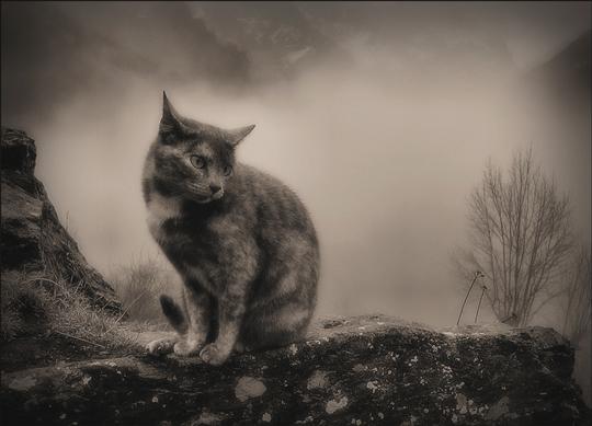 Lluna, the cat mother by Ferran Jorda