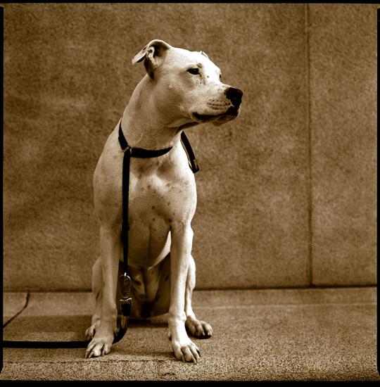 """Bronica dog by """"fast boy"""""""
