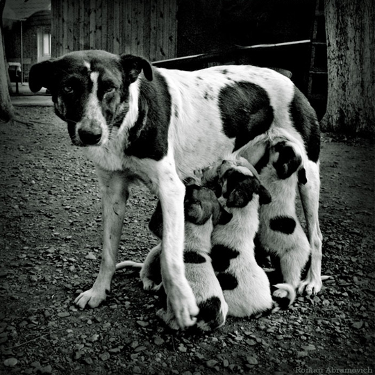 A dog's life (Mother) by Roman Abramovich