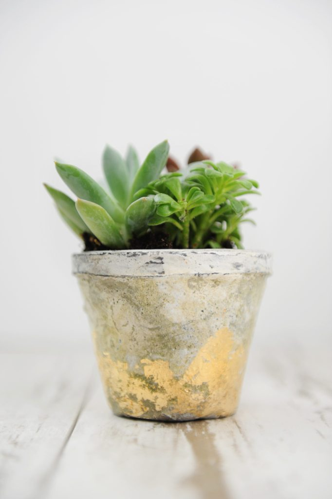 diy succulent pots