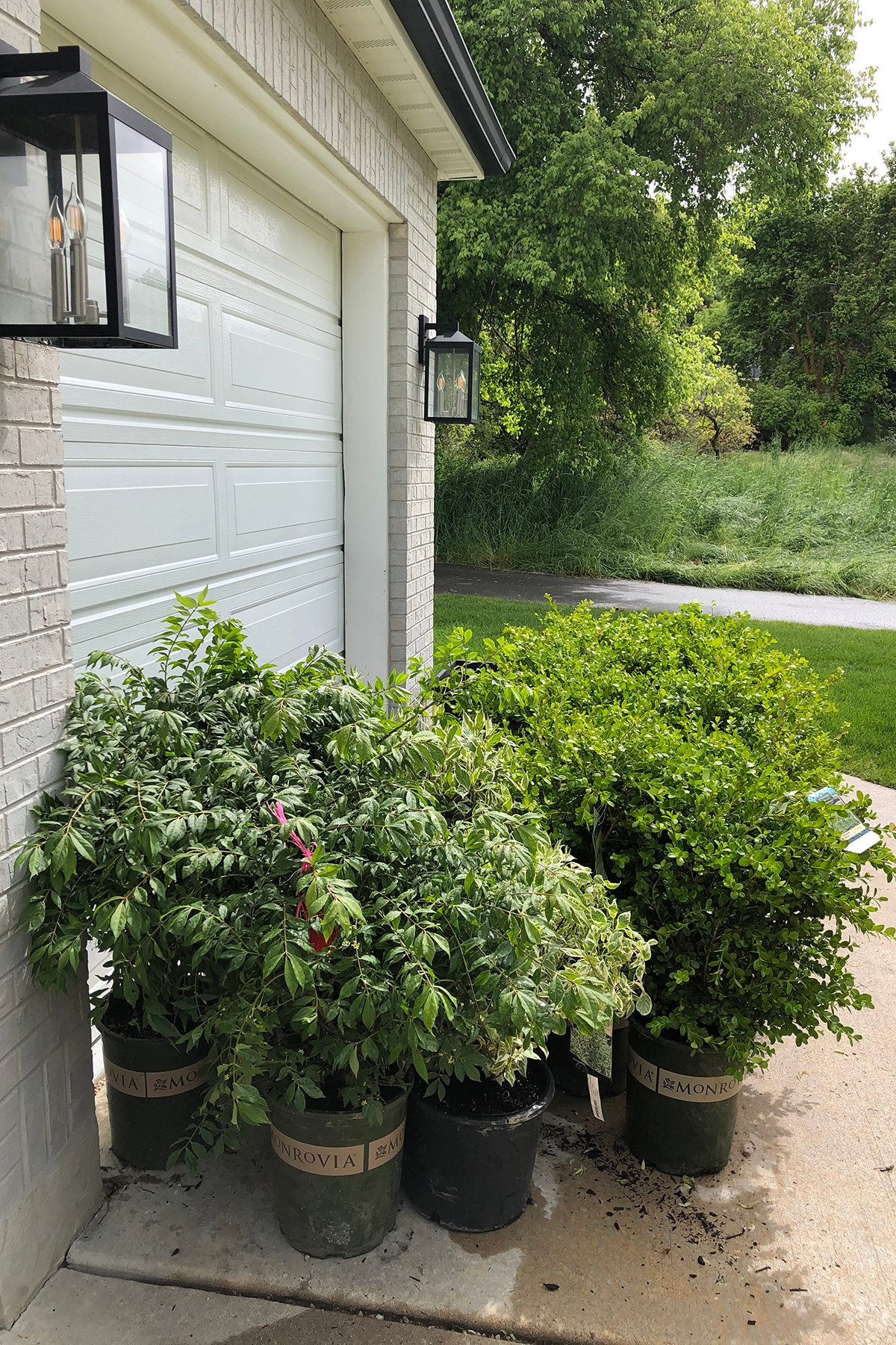 Diy front yard plants