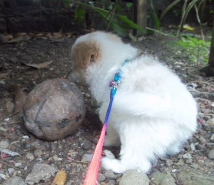 Discovering the coconut fruit