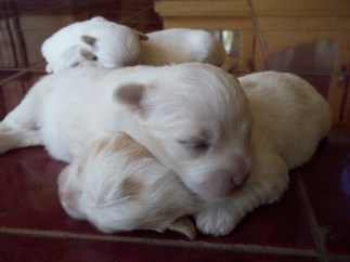 Sleeping puppies in pairs