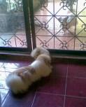 Shih-Poo bonding