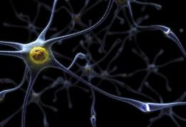 Brain Function (29)