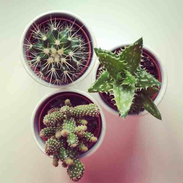 IKEA succulents, helping us liveLAGOM