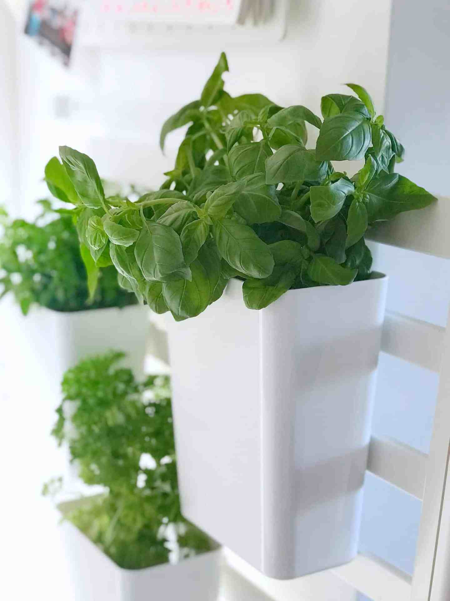 How to make an indoor salad and herb garden