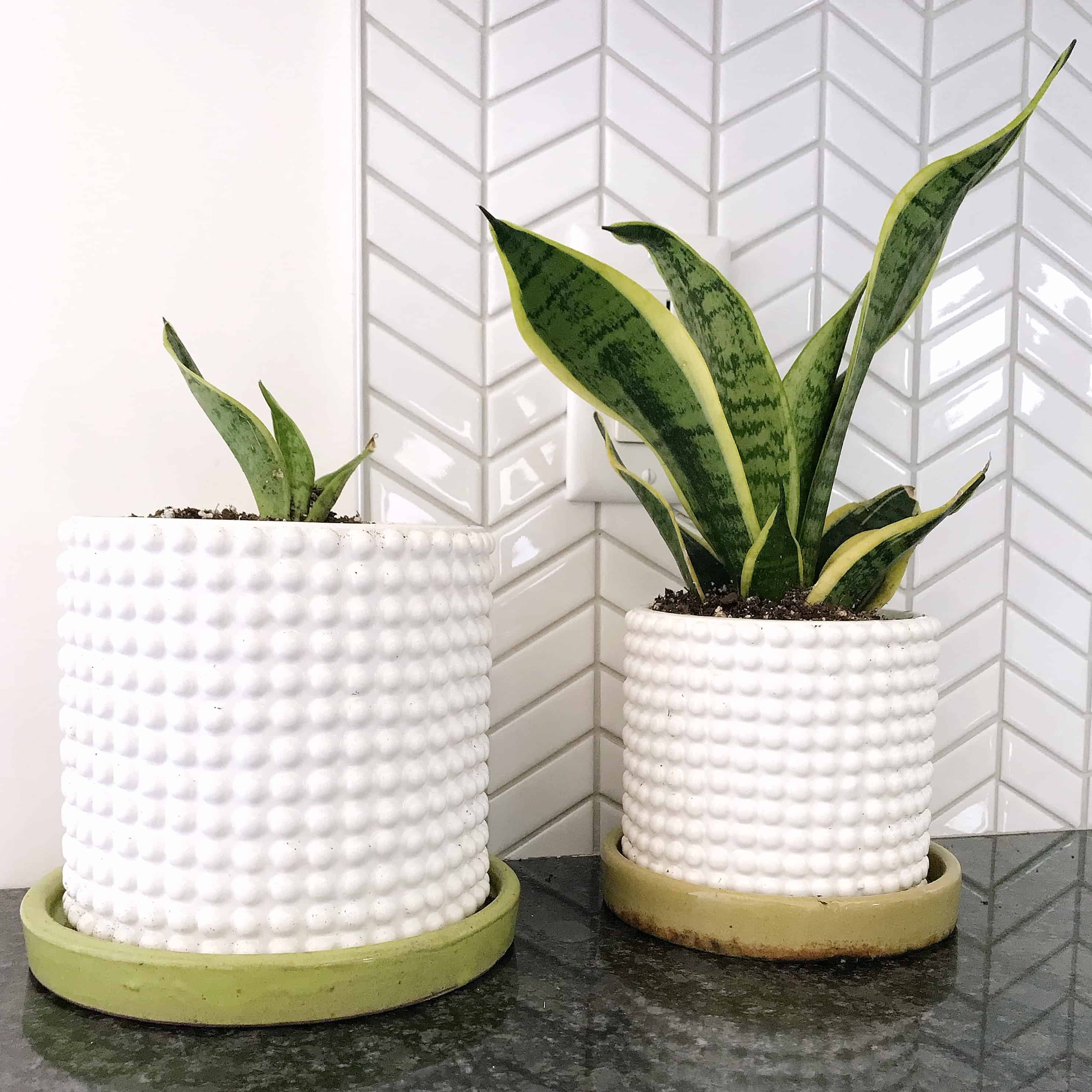 Plants in white textured pots in front of chevron tiles