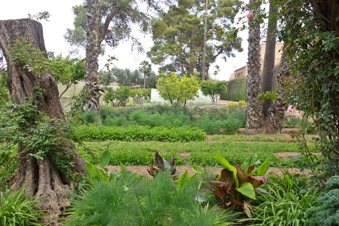 The kitchen garden at La Mamounia, Marrakech