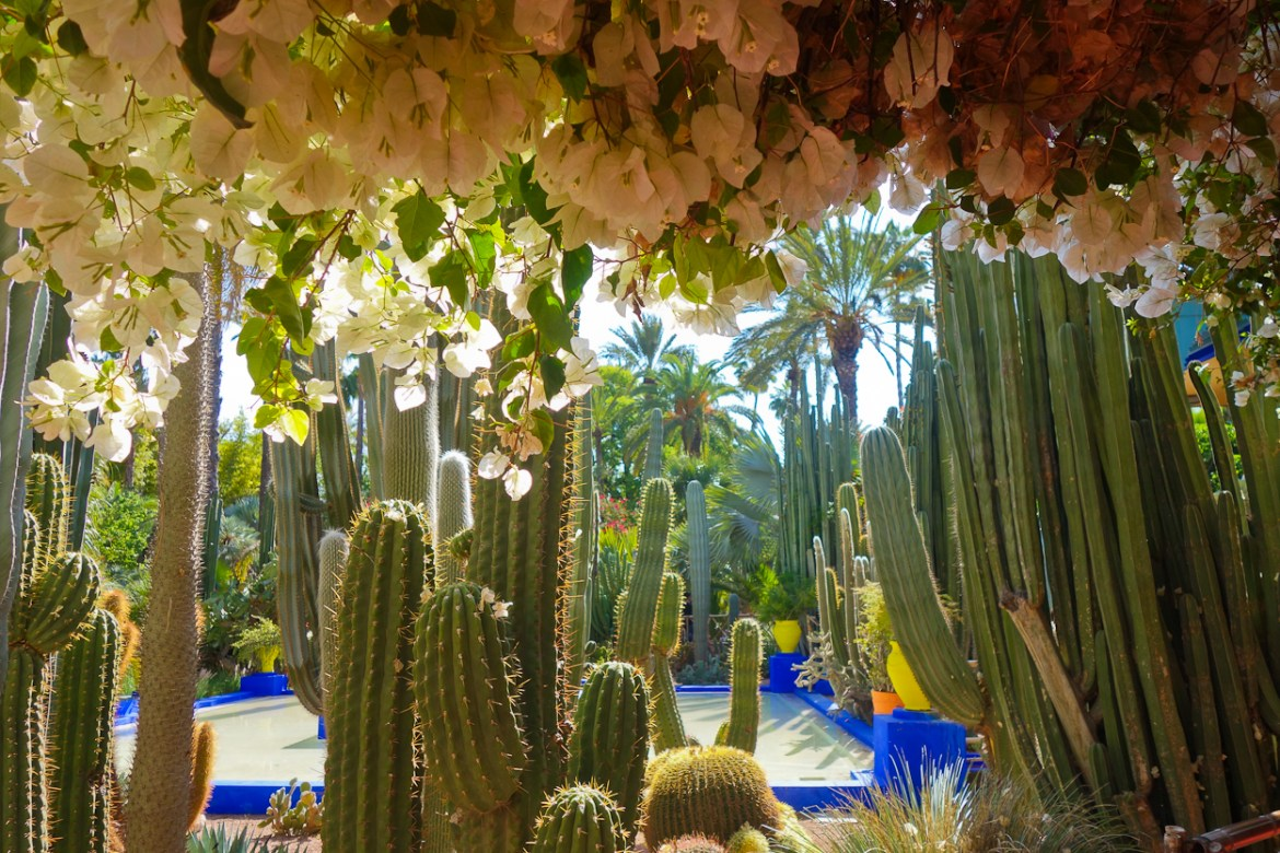 Cacti at Jardin Majorelle, Marrakech