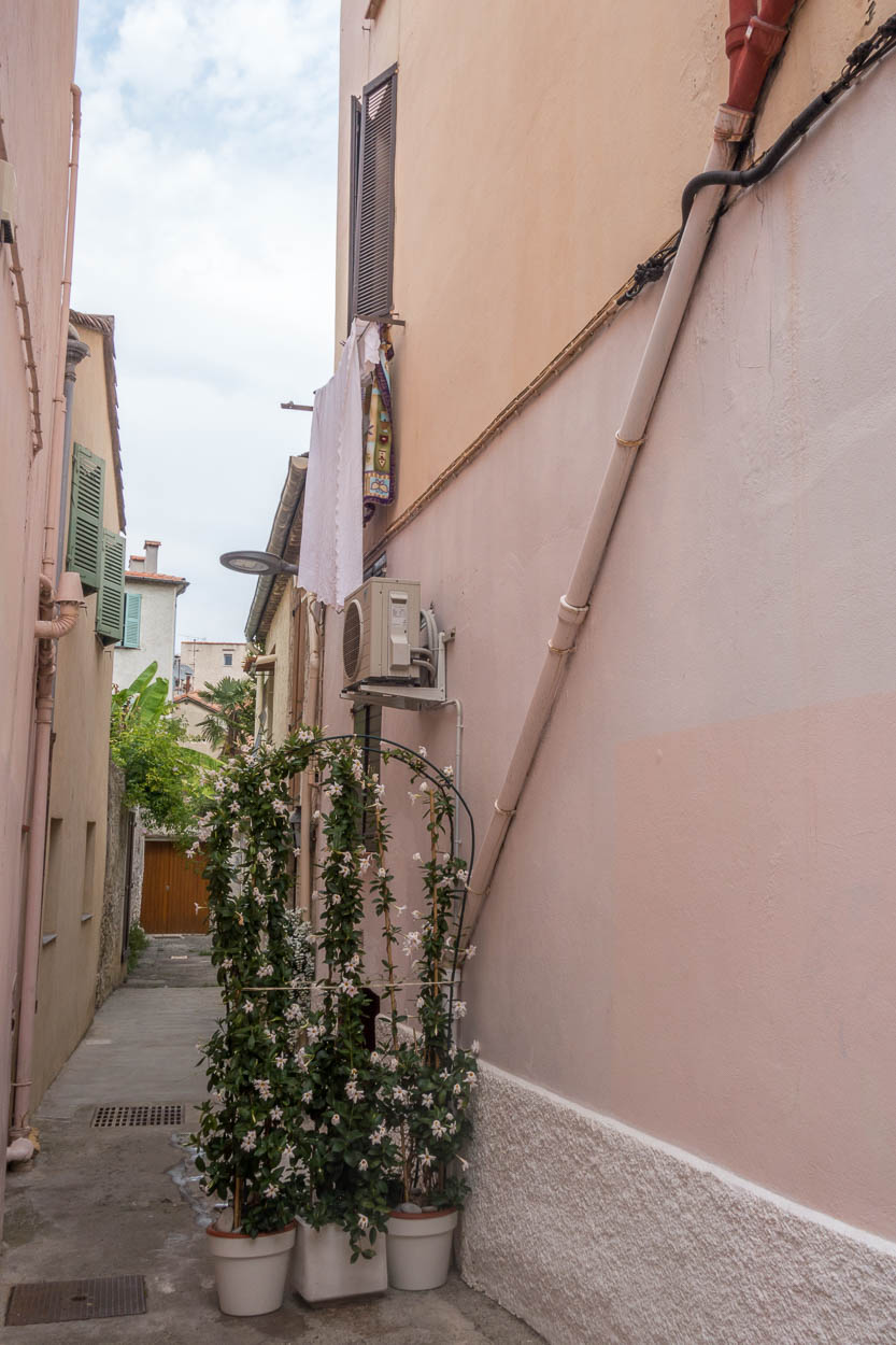 Flower-covered trellis in old Antibes