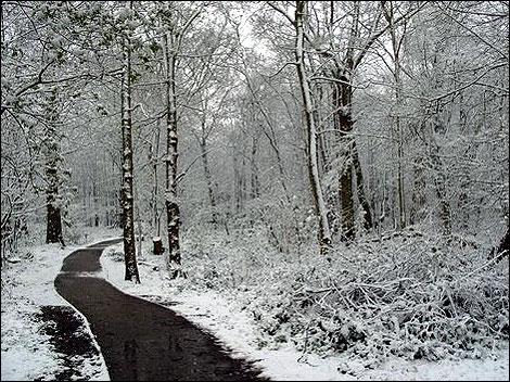 snow_norsey_woods_470_470x352