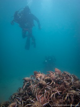 Spider Crab Pyramid with 2 divers