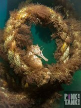 LOGO Seahorse in Rope Loop