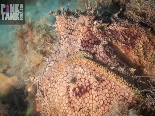 LOGO Octopus Close Up