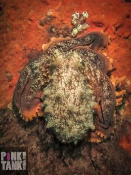 LOGO Maori Octopus on Pylon