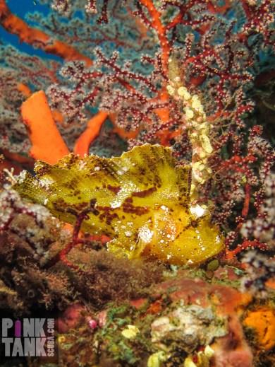 LOGO Busy Yello Leaf fish portrait