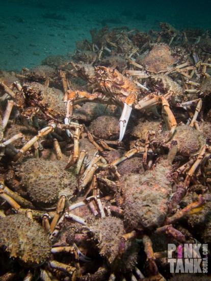 LOGO Crab Stack