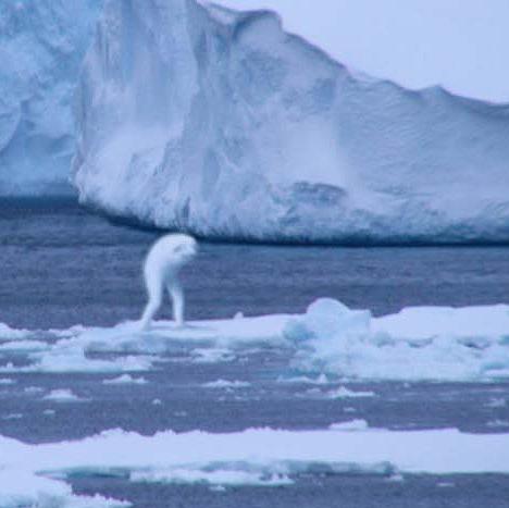 Antarctic ningen humanoid --