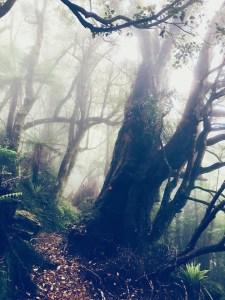 Hiking trail in fog, New Zealand