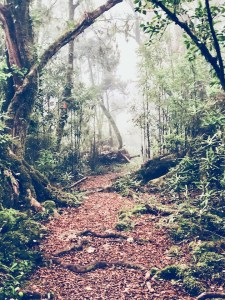 Fantastic hiking trail in New Zealand