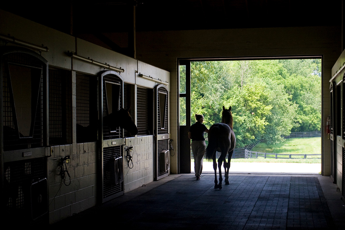 Yearling Barn 1