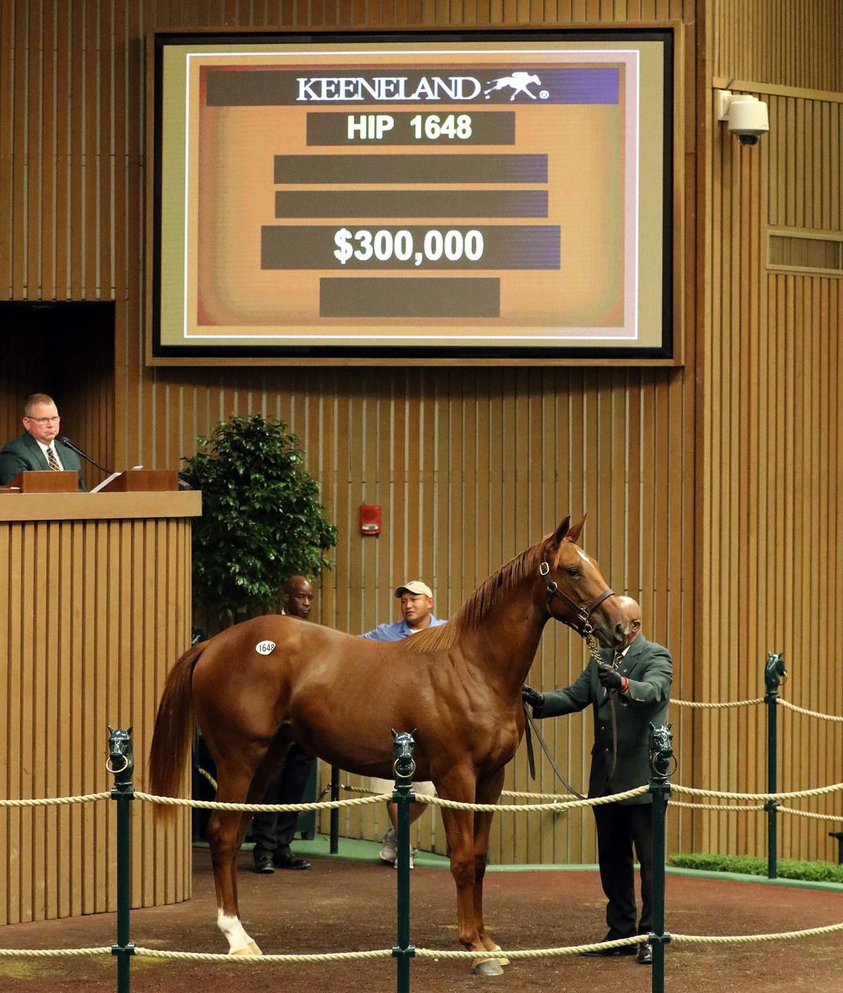 BROKEN VOW Filly Brings $300,000 at Keeneland September