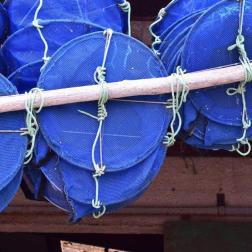 huitres-rouzieres-bouzigues (33)