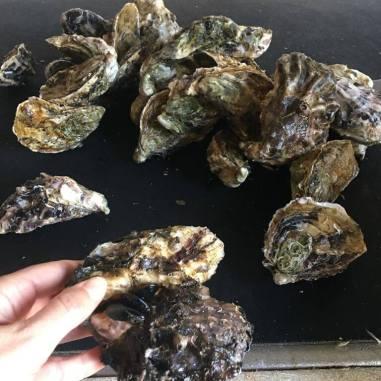 huitres-rouzieres-bouzigues (41)