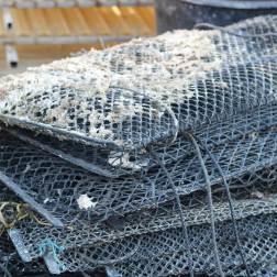 huitres-rouzieres-bouzigues (6)