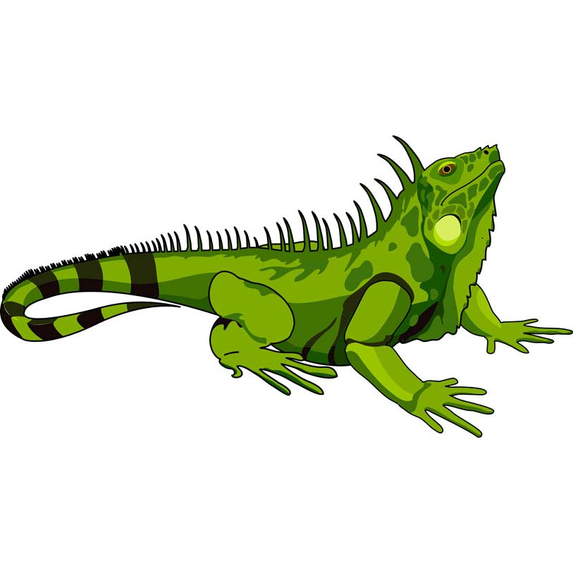 Dibujos De Iguanas Coloring Page