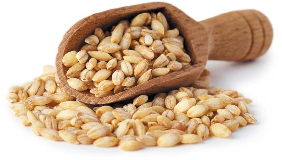 Manfaat Barley yang Bisa Gantikan Makan Nasi