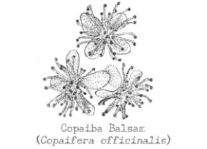 Copaiba_Balsam_web(1)