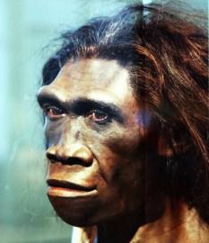 a Neanderthal ancestor?