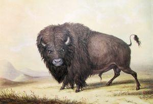 1280px-George_Catlin_Bull_Buffalo