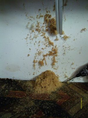 Signs of a Carpenter Ant Infestation  Pioneer Pest