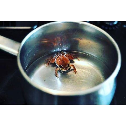 Put a frog in a pot of water and start heating the water.As the temperature of the water rises, the frog is able to adjust its body temperature accordingly.The frog keeps on adjusting with increase in temperature... Just when the water is about to reach boiling point, the frog is not able to adjust anymore... At that point the frog decides to jump out... The frog tries to jump but is unable to do so, because it has lost all its strength in adjusting with the rising water temperature... Very soon the frog dies.What killed the frog?Many of us would say the boiling water... But the truth is, what killed the frog was its own inability to decide when it had to jump out!We all need to adjust with people and situations, but we need to be sure when we need to adjust and when we need to confront/face.There are times when we need to face the situation and take the appropriate action... If we allow people to exploit us physically, mentally, emotionally or financially, they will continue to do so... We have to decide when to jump.Let us jump while we still have the strength.Think on It !! #frog #negativepeople#thinkpositive #moveon #jumpout #adjust #timing #truth #life #lessonoftheday #lifelessons #wiseup #removenegativity #removenegativepeople #chinup #takeaction #appropriateaction #stopadjustingyourself