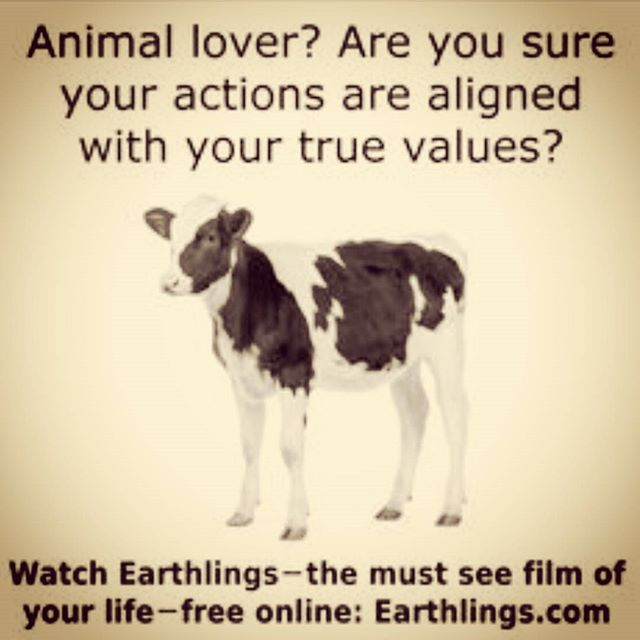 I dare everyone to watch this. DO IT! #MakeTheConnection #Earthlings Find it free on Youtube, search Earthlings Documentary. #EarthlingsDocumentary