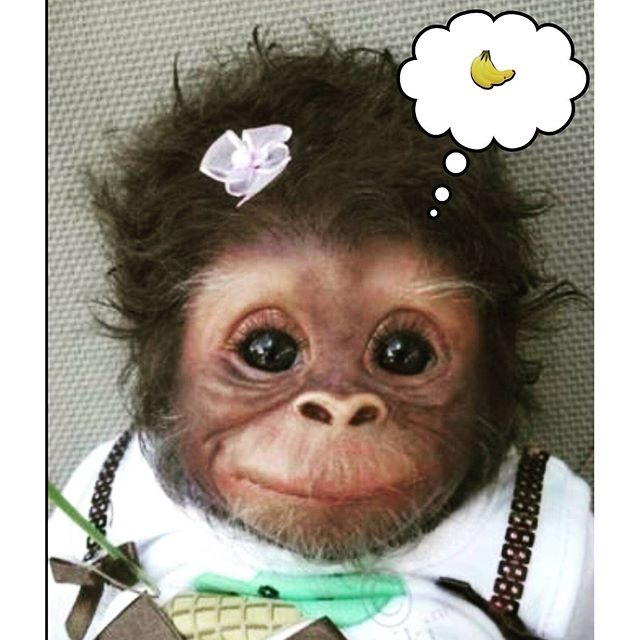 Banana Breakfast #Monkey #Banana #CuteMonkey #Primate #Adorable