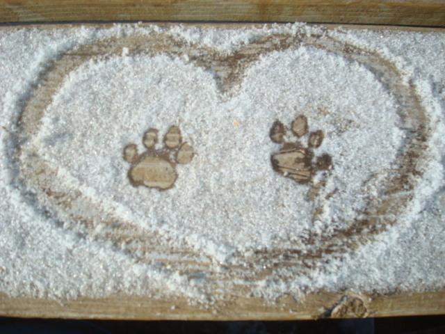 Broken Roads Ranch Animal Sanctuary
