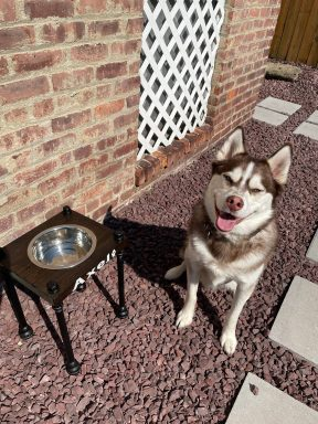 Industrial style Raised single bowl Dog feeder -NEW LOWER PRICES