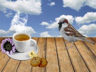 tea-opgave-web