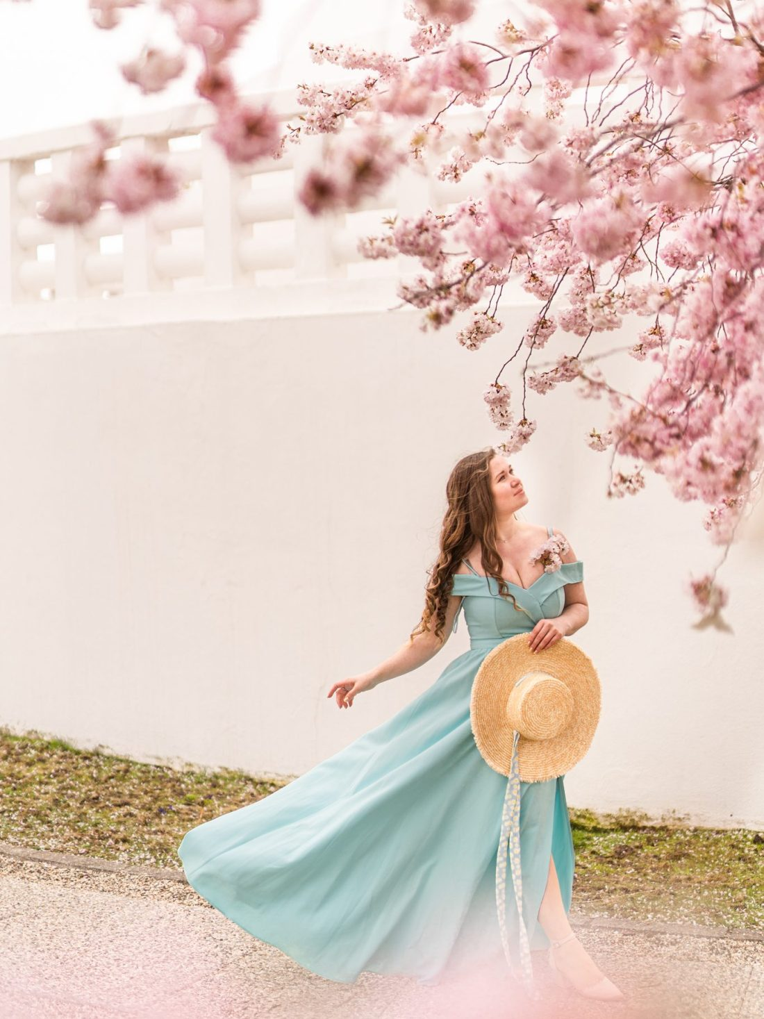 Kirschblüten und Magnolien in Wien