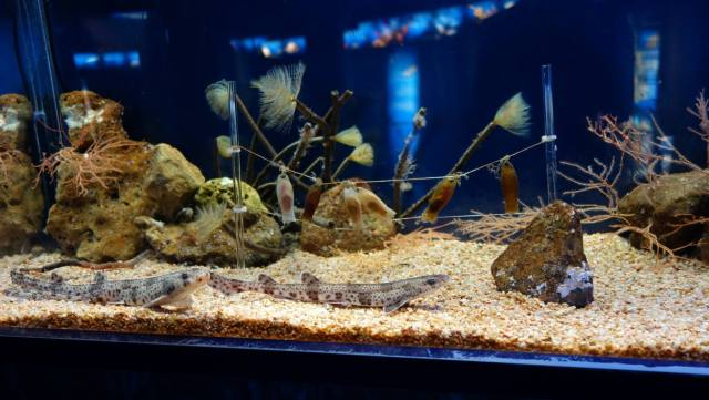 Barcelona Trip Barcelona Aquarium