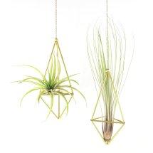 HANGING PLANTS plantas colgantes cactus suculantes decorar con plantas pipolart pendulum doble